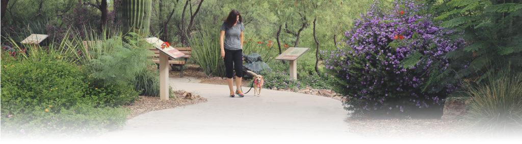 Dog Training Tucson Az
