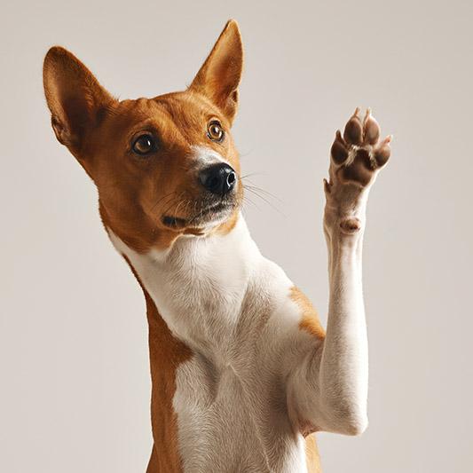 tucson puppy classes